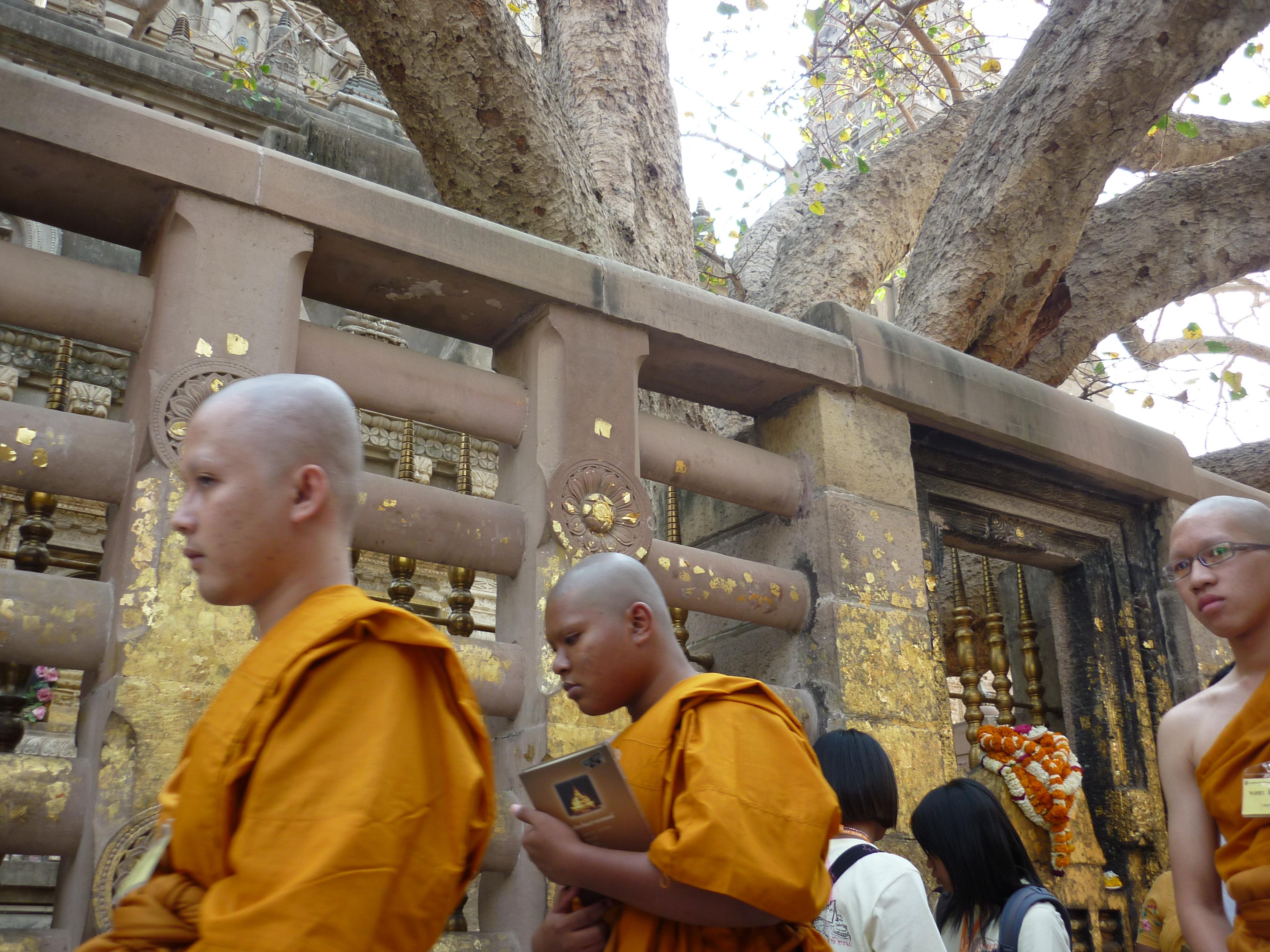 Bodhgaya // Genau hinter dieser Absperrung erlangte Siddharta Gautama in seinem 35. Lebensjahr nach langer Meditation Erleuchtung. Just in dem Moment, als ihm ein Blatt vom Bodhibaum auf den Bauch fiel, wurde er zu Buddha, dem Erleuchteten. Aus diesem Grunde ist Bodhgaya ein beliebter Pilgerort für spirituelle Menschen von überall her. Ich selbst stoße in dieser Stadt auf einen Sadhu (Heiliger Mann), der mir ein Chillum nach dem anderen stopft. Anstatt Erleuchtung finde ich, dank des gigantischen Rausches, ein ungeordnetes Chaos in mir selbst und fühle mich fast als Hippie. Schnelle Weiterreise ...