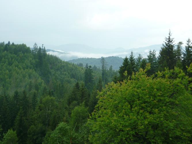 Naturkunde - Ließ der Regen endlich einmal nach und verzog sich der Nebel, wurde der Blick frei auf eine fast magische und verwunschene Umgebung. Ich als Großstadtkind hörte dann förmlich die Wölfe heulen und Kobolde, Basilisken, Chimären, Golems, Greife, Lindwürmer, Trolle, Schreckgespenster, Orks, Goblins, Hobgoblins, Aaskriecher, Doppelgänger, Eulenbären, Gallertblöcke, Harpyien, Troglodythen, Nachtvetteln, Tarrasken, Xorne, Zehrer, Gorgonen, Gargylen, Girallons, Gedankenschinder, Düstermäntel, Chaosbestien, Ätherspinnen, Minotauren, Werwölfe, Oger, Gnolle, Grauschlicke, Räuber und Vandalen durchs Gestrüpp stampfen.(Irgendwo in den Bergen)
